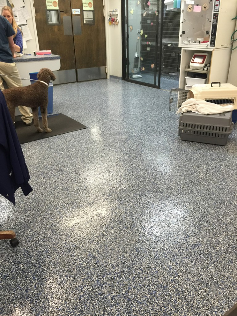 Kennels Animal Hospitals Flooring Seal Krete High